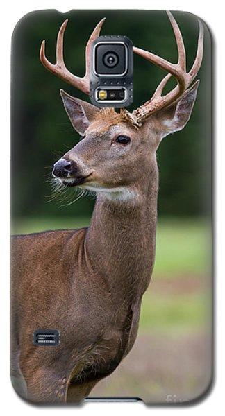 Whitetail Deer Buck Galaxy S5 Case
