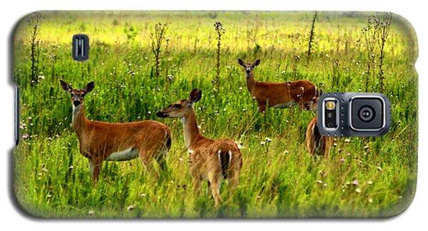 Whitetail Deer Family Galaxy S5 Case by Barbara Bowen