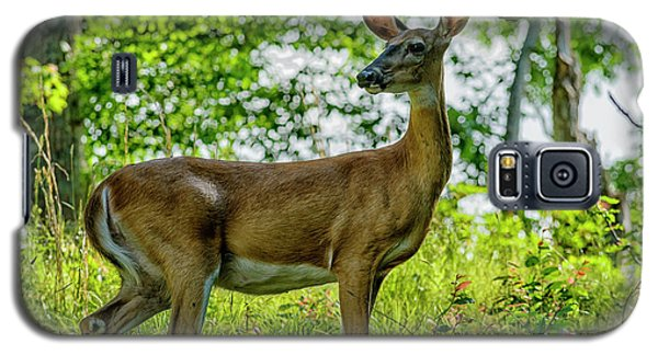 Galaxy S5 Case featuring the photograph Whitetail Deer  by Thomas R Fletcher