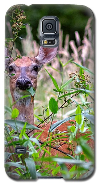 Whitetail Doe Galaxy S5 Case