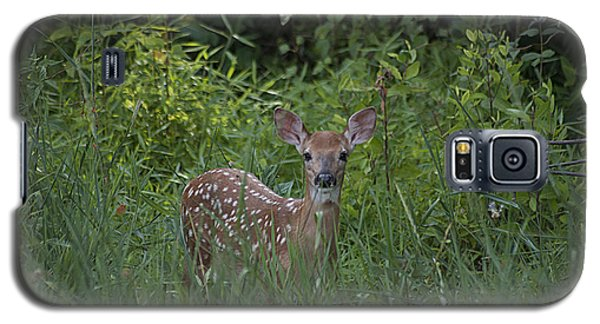Galaxy S5 Case featuring the photograph Whitetail Fawn 20120711_37a by Tina Hopkins