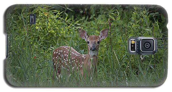 Whitetail Fawn 20120711_37a Galaxy S5 Case