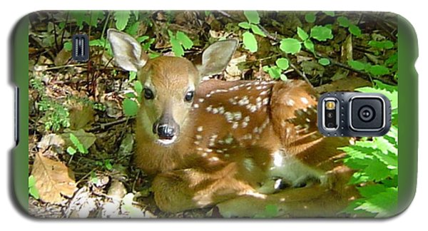 Whitetail Fawn II Galaxy S5 Case