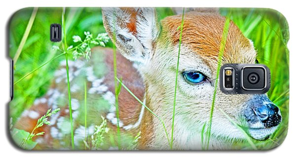 Galaxy S5 Case featuring the photograph Whitetailed Deer Fawn by A Gurmankin
