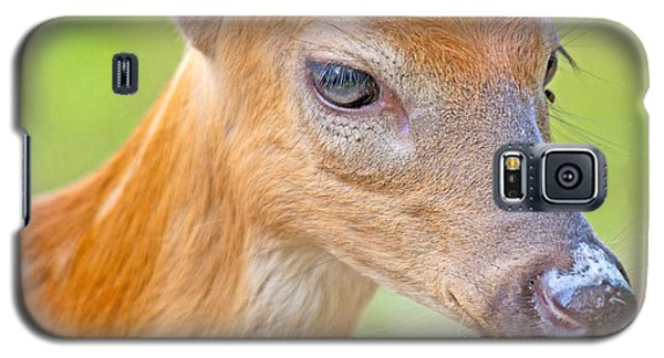 Galaxy S5 Case featuring the photograph Whitetailed Deer Fawn Portrait by A Gurmankin