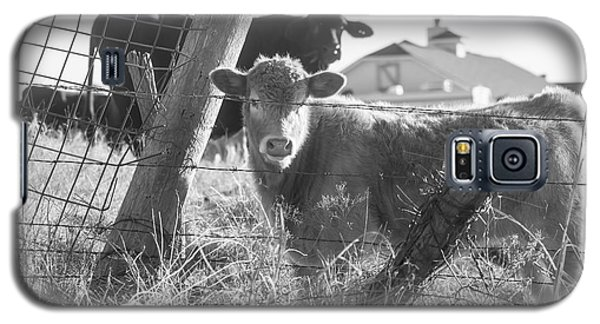 Who Are You, Angus Cows Seem To Ask Galaxy S5 Case by Toni Hopper