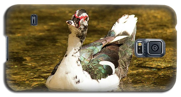 Who Me Wildlife Art By Kaylyn Franks Galaxy S5 Case