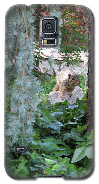 Galaxy S5 Case featuring the photograph Whoa Nellie by Marie Neder