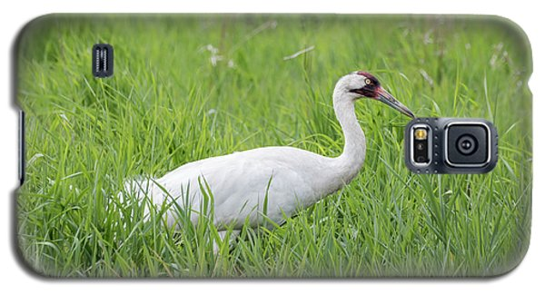 Whooping Crane 2017-2 Galaxy S5 Case by Thomas Young