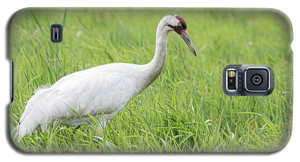 Whooping Crane 2017-3 Galaxy S5 Case by Thomas Young