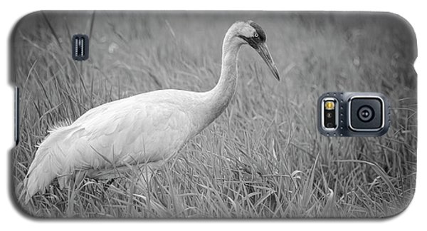 Whooping Crane 2017-4 Galaxy S5 Case by Thomas Young