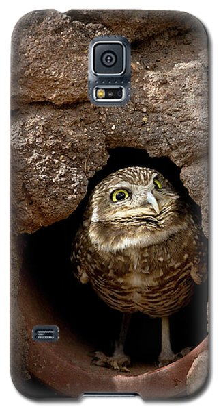 Who's There Galaxy S5 Case by Phyllis Denton