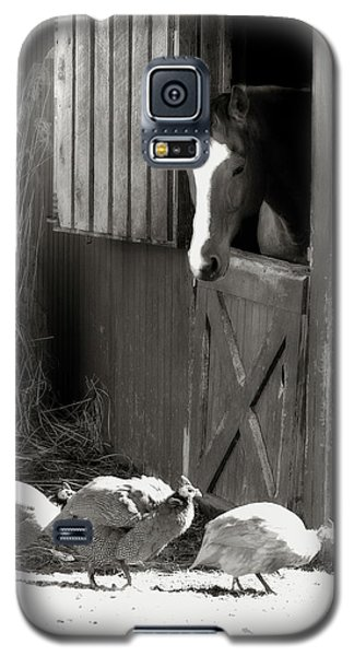 Galaxy S5 Case featuring the photograph Why Did The Guinea Hen Cross The Road - Sepia by Angela Rath