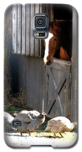 Galaxy S5 Case featuring the photograph Why Did The Guinea Hen Cross The Road by Angela Rath