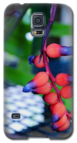 Wild About Bromeliads2 Galaxy S5 Case