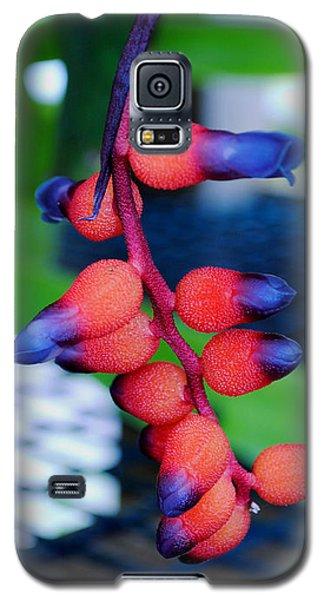 Wild About Bromeliads2 Galaxy S5 Case