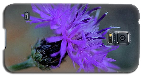 Wild And Beautiful 32 Galaxy S5 Case