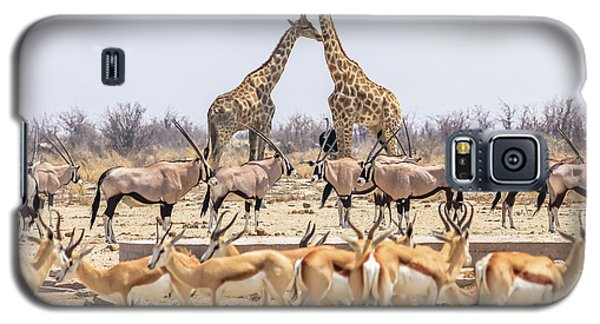 Wild Animals Pyramid Galaxy S5 Case