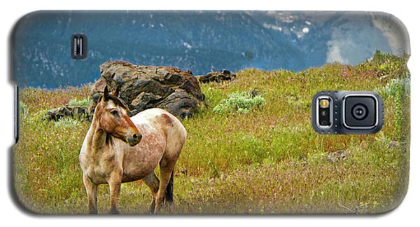Wild Appaloosa Horse Galaxy S5 Case