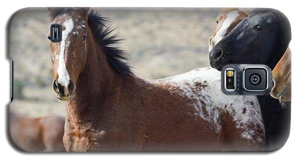 Wild Appaloosa Mustang Horse Galaxy S5 Case
