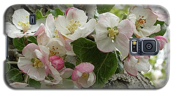 Galaxy S5 Case featuring the photograph Wild Apple Blossoms by Angie Rea