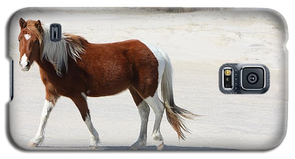 Wild Assateague Ponies 2 Galaxy S5 Case