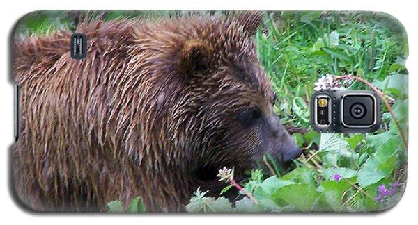 Wild Bear Eating Berries  Galaxy S5 Case