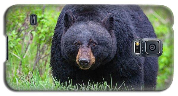 Wild Black Bear Galaxy S5 Case