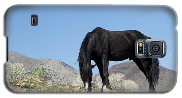 Wild Black Stallion Horse Galaxy S5 Case