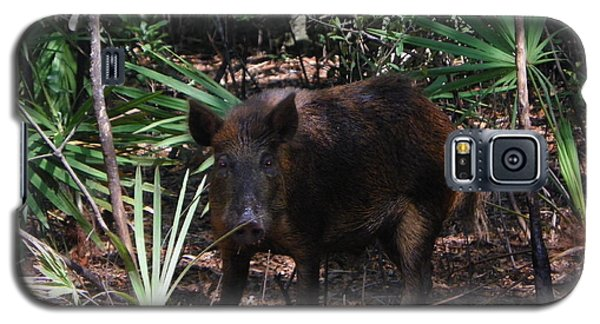 Wild Boar I Galaxy S5 Case
