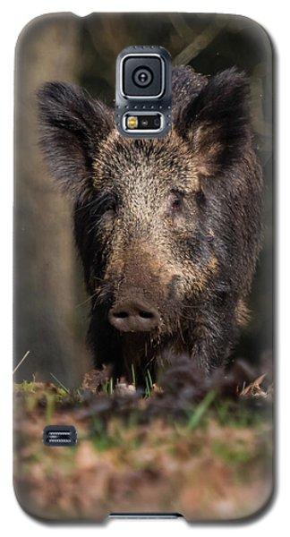 Wild Boar Sow Portrait Galaxy S5 Case