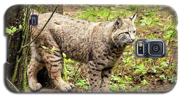 Wild Bobcat Galaxy S5 Case