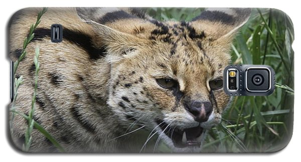Galaxy S5 Case featuring the photograph Wild Cat by Gary Bridger