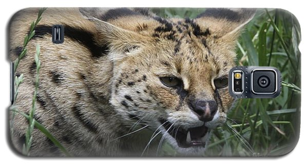 Wild Cat Galaxy S5 Case by Gary Bridger