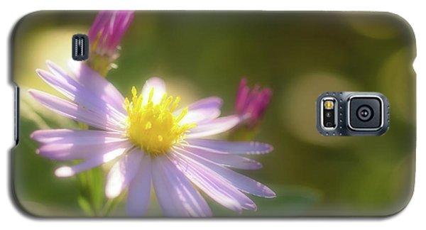 Galaxy S5 Case featuring the photograph Wild Chrysanthemum by Tatsuya Atarashi