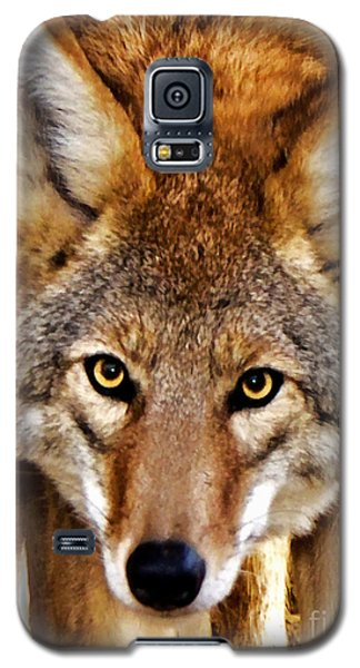 Galaxy S5 Case featuring the photograph Wild Coyote by Adam Olsen