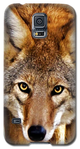 Wild Coyote Galaxy S5 Case