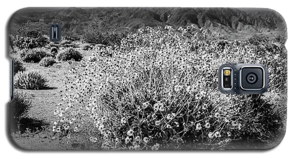 Galaxy S5 Case featuring the photograph Wild Desert Flowers Blooming In Black And White In The Anza-borrego Desert State Park by Randall Nyhof