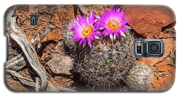 Wild Eyed Cactus Galaxy S5 Case