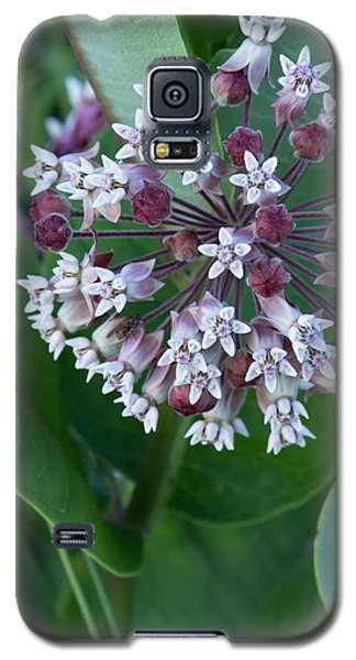 Wild Flower Star Burst Galaxy S5 Case