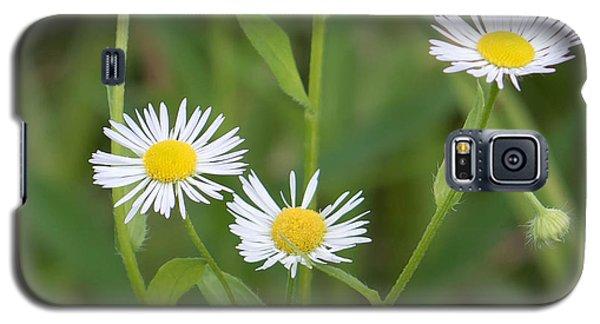 Wild Flower Sunny Side Up Galaxy S5 Case