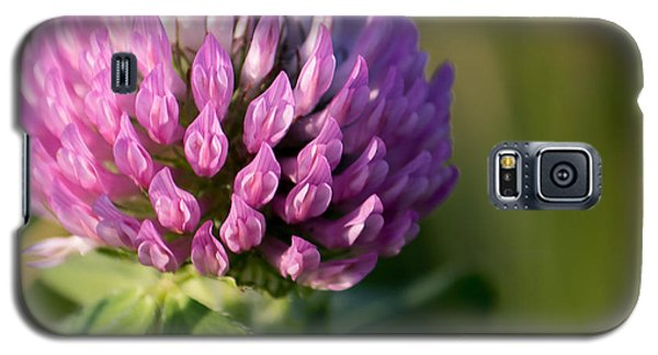 Wild Flower Bloom  Galaxy S5 Case