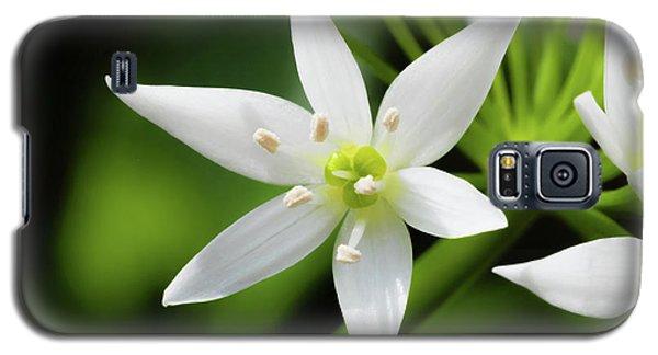 Wild Garlic Flower Galaxy S5 Case