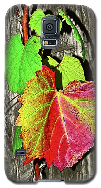 Galaxy S5 Case featuring the photograph Wild Grape Vine By Kaye Menner by Kaye Menner