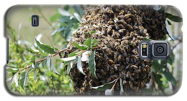 Wild Honey Bees Galaxy S5 Case