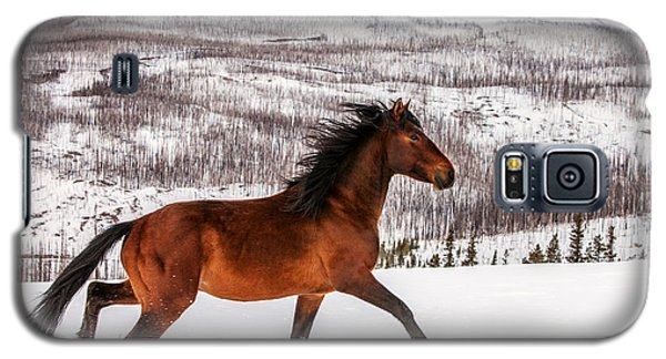 Wild Horse Galaxy S5 Case by Todd Klassy