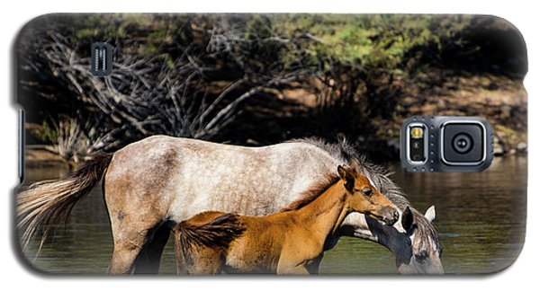 Wild Horses On The Salt River Galaxy S5 Case
