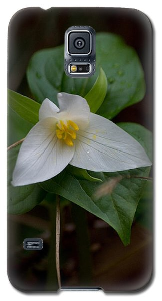 Wild Lily Galaxy S5 Case