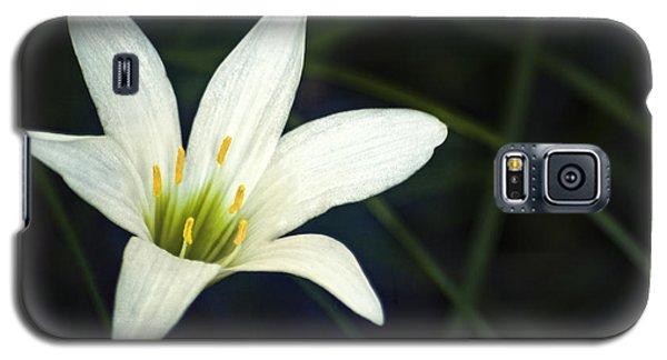 Wild Lily Galaxy S5 Case by Carolyn Marshall