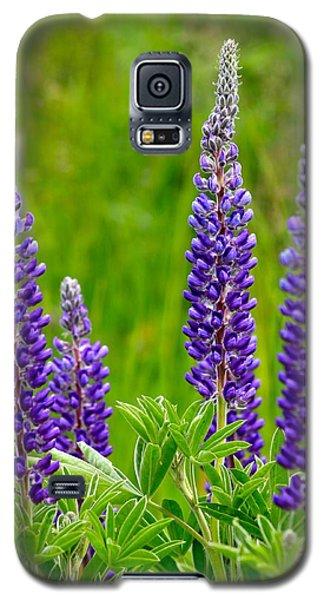 Wild Lupine Galaxy S5 Case